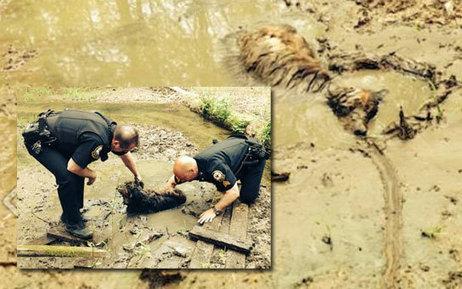 Pluto, un chien de 13 ans, est bloqué dans la boue jusqu'au cou: découvrez son sauvetage inespéré par deux policiers (vidéo) | CaniCatNews-actualité | Scoop.it