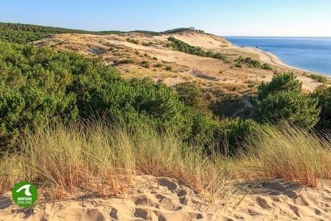 L'Office National des Forêts… plus de 150 ans d'experience en milieu dunaire | Revue de presse Pays Médoc | Scoop.it