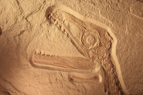 Fossilized culture, not lack of funding, put news media on deathwatch — Monday Note | News, Code and Data | Scoop.it