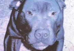Death Row Dog Lennox Put Down After 2-Year Legal Battle | kittens | Scoop.it