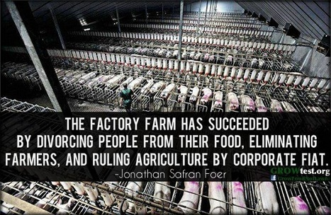 MORE, BIGGER, FASTER - What You Need To Know About Factory Farming Your Food | YOUR FOOD, YOUR ENVIRONMENT, YOUR HEALTH: #Biotech #GMOs #Pesticides #Chemicals #FactoryFarms #CAFOs #BigFood | Scoop.it