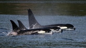 Free Corky | Animals in captivity - Zoo, circus, marine park, etc.. | Scoop.it
