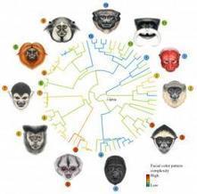 Evolution is written all over your face | Aux origines | Scoop.it
