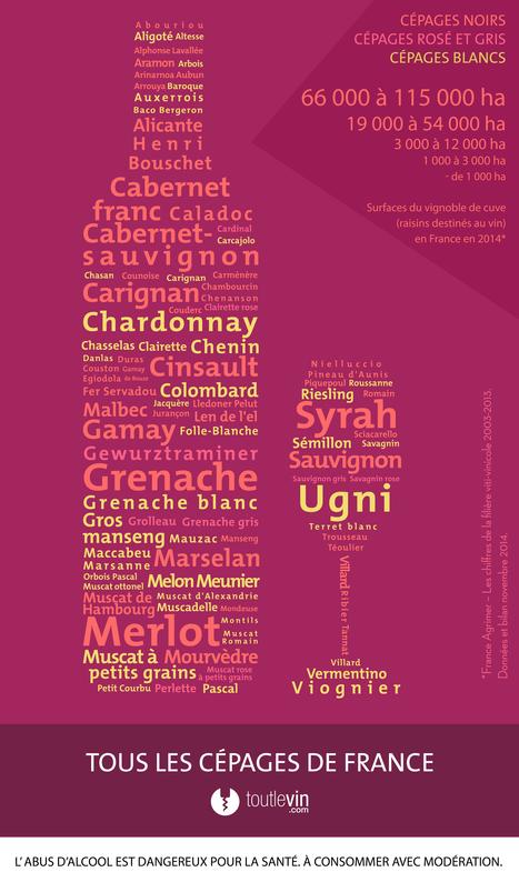 Tous les cépages de France - infographie | Wine and the City - www.wineandthecity.fr | Scoop.it