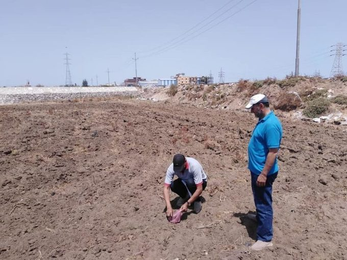 Egypt Plants 590 Trees to Reduce Pollution in Eastern Delta
