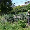Agriculture en Aquitaine