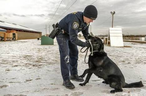 OKC police dog stabbed during Sunday pursuit dies Monday   Police News   Scoop.it