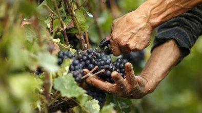 Global wine shortage | Oven Fresh | Scoop.it