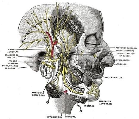 Human pdf gray anatomy atlas of