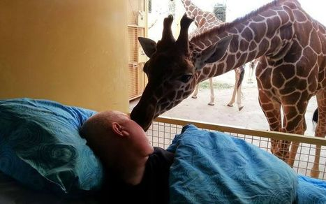 Giraffe 'kisses' goodbye dying zoo worker in touching photograph | News You Can Use - NO PINKSLIME | Scoop.it