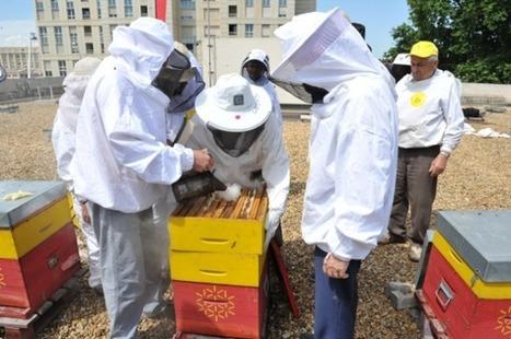 Montpellier, paradis des abeilles | CaféAnimé | Scoop.it