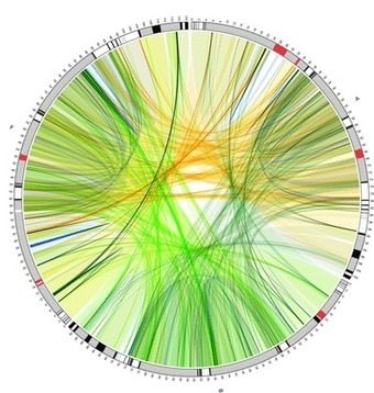 Sample Images Created with Circos // CIRCOS Circular Genome Data Visualization | A New Society, a new education! | Scoop.it