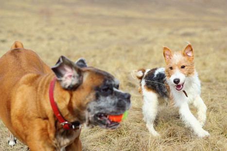 Most Common Ways In Which People Fail Their Dogs | Pets | Scoop.it