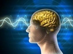 Syndrome d'Asperger & autisme : des différences cérébrales identifiées (Live Science, août 2013) | Surdoués - Haut-potentiel - Profil atypique | Scoop.it
