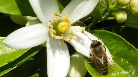 Caffeine exposure leaves bees buzzing | Music, Videos, Colours, Natural Health | Scoop.it