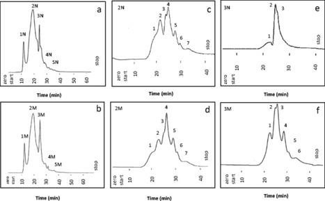 Phytochemical Analysis of Amaranthus Viridis L.