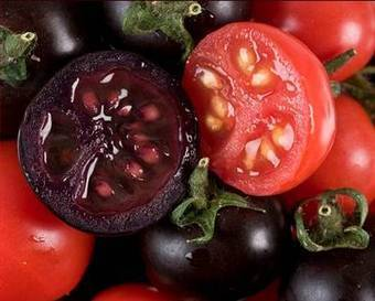 Happy News - New Purple Tomatoes Stay Fresh Twice as Long | Articles mentioning John Innes Centre | Scoop.it