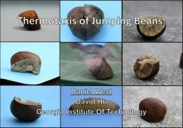 Mexican jumping beans to influence robot design? | Ubergizmo | The Robot Times | Scoop.it