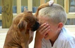 """Empathy In Dog Training - """"the capacity to place oneself in another's position""""   Empathy and Animals   Scoop.it"""