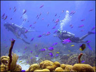 Diving in Placencia Belize | Belize in Social Media | Scoop.it