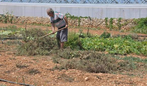 Maltese farmers fear farming could become a hobby
