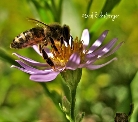 I appreciate the honeybees that visit my garden | Annie Haven | Haven Brand | Scoop.it