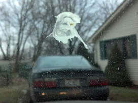 Northeast Ohio man claims bird droppings show image of Christ | No Such Thing As The News | Scoop.it
