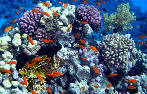 Be Mindful of #Marine #Ecosystems | Rescue our Ocean's & it's species from Man's Pollution! | Scoop.it