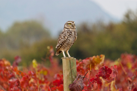 Climate Change Puts the Squeeze on Wine Production   Saving the Wild: Nature Conservation in the Caucasus   Scoop.it
