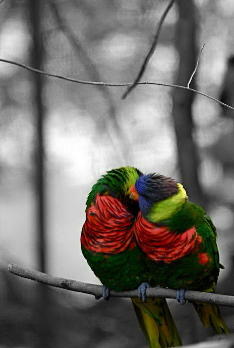 34 Beautiful Selective Color Photos | Everything Photographic | Scoop.it
