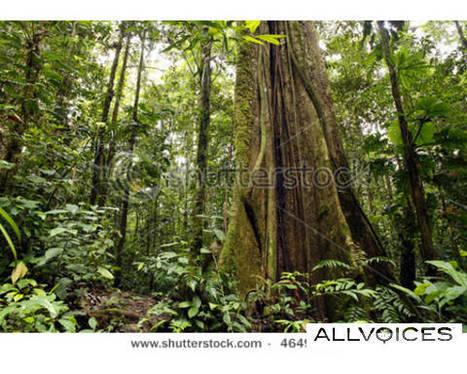 Deforestation in Amazon rainforests - allvoices | Deforestation In The Amazon Rainforest | Scoop.it