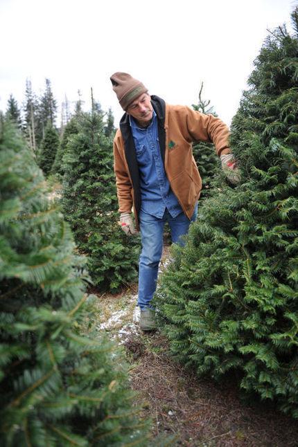 Christmas Tree Farm Industry Shrinking | North Carolina Agriculture | Scoop.it
