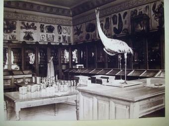 De Gabinete de Historia Natural a Museo de Ciencias Naturales | Educadores innovadores y aulas con memoria | Scoop.it