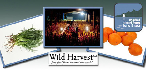 Wild Harvest | Market report | monk's beard | Rhubarb | Voyages et Gastronomie depuis la Bretagne vers d'autres terroirs | Scoop.it