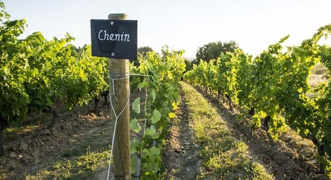 Journée d'étude | Le CHENIN, histoire et actualité | World Wine Web | Scoop.it