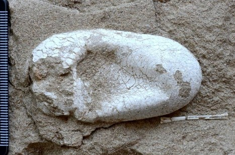 Complete dinosaur eggs discovered in China | News You Can Use - NO PINKSLIME | Scoop.it