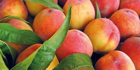 Des extraits végétaux de la vigne pour préserver les fruits et légumes | Arboriculture: quoi de neuf? | Scoop.it