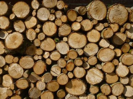 Western Wisconsin timber economy may be headed for downturn | Timberland Investment | Scoop.it
