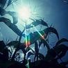 Crop Improvement & Plant Breeding Research