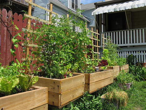 Scholars map city food gardens with Google Earth | Urban Aquaponics Farm | Scoop.it