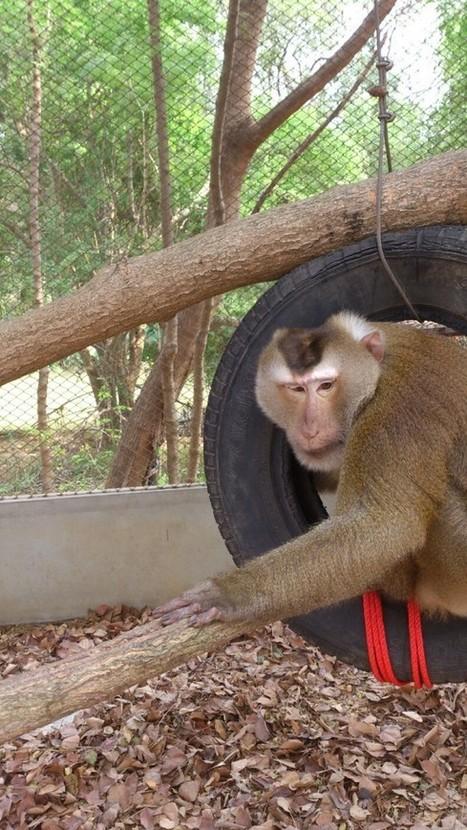 Safari Park Volunteer Program - Safari Park Volunteer Program - Bophlo Kanchanaburi, Thailand | Best Website Collection | Scoop.it