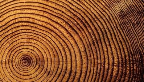 La musique des arbres | Aux confins de la science et de l'art | Bartholomäus Traubeck | MUSÉO, ARTS ET SPECTACLES | Scoop.it