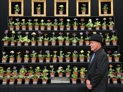 Chelsea flower show 2015 – in pictures - The Guardian | Auriculas and  other Gardening topics | Scoop.it