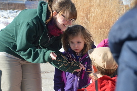 Backyard Connections: Exploring Nature in Winter | Environmental Education & Wildlife Conservation | Scoop.it