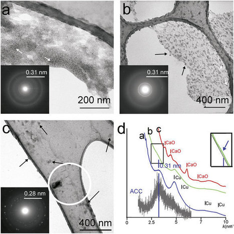 Formation of amorphous calcium carbonate in caves and its implications for speleothem research | Mineralogy, Geochemistry, Mineral Surfaces & Nanogeoscience | Scoop.it