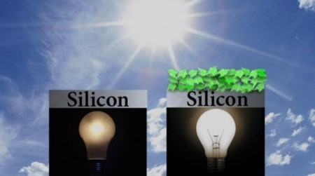 """Spinach protein boosts efficiency of """"biohybrid"""" solar cells 