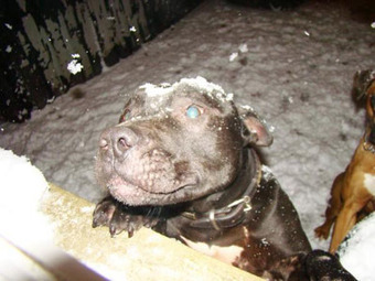 Lennoxgate? Outcry for Investigation of Belfast After Lennox's Death   Nature Animals humankind   Scoop.it