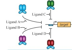 New tools advance bio-logic: Researchers build more sophisticated synthetic gene circuits | leapmind | Scoop.it