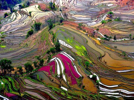 Terraced Rice Fields | World Regional Geography | Scoop.it