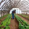 Organic Gardening in Colorado